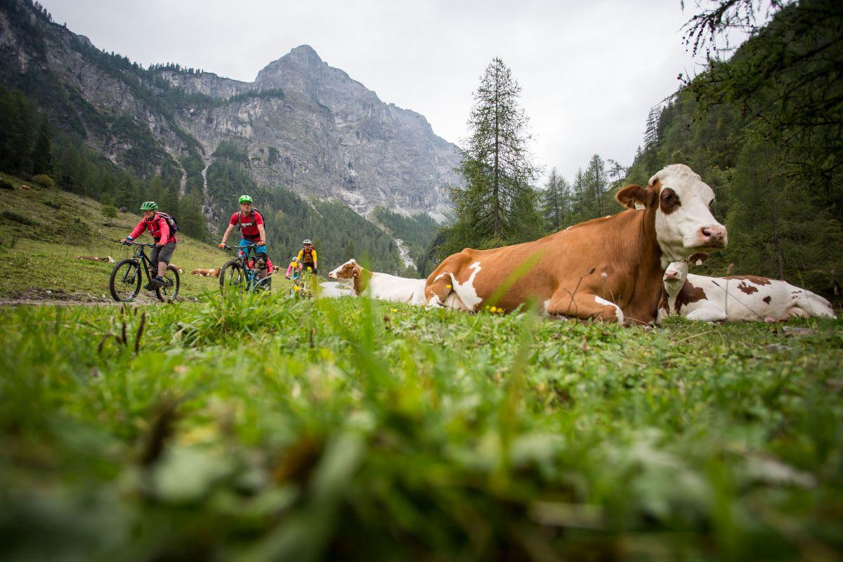 MTB-Tour Flachau, ©SalzburgerLand Tourismus, Bild von David Schultheiss